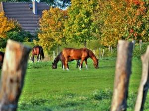 Foto-Pferde2